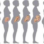 Вес ребенка в утробе матери от чего зависит