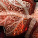 Сделать узи сосудов головного мозга в севастополе