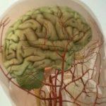 Спазм сосудов головного мозга к какому врачу обращаться